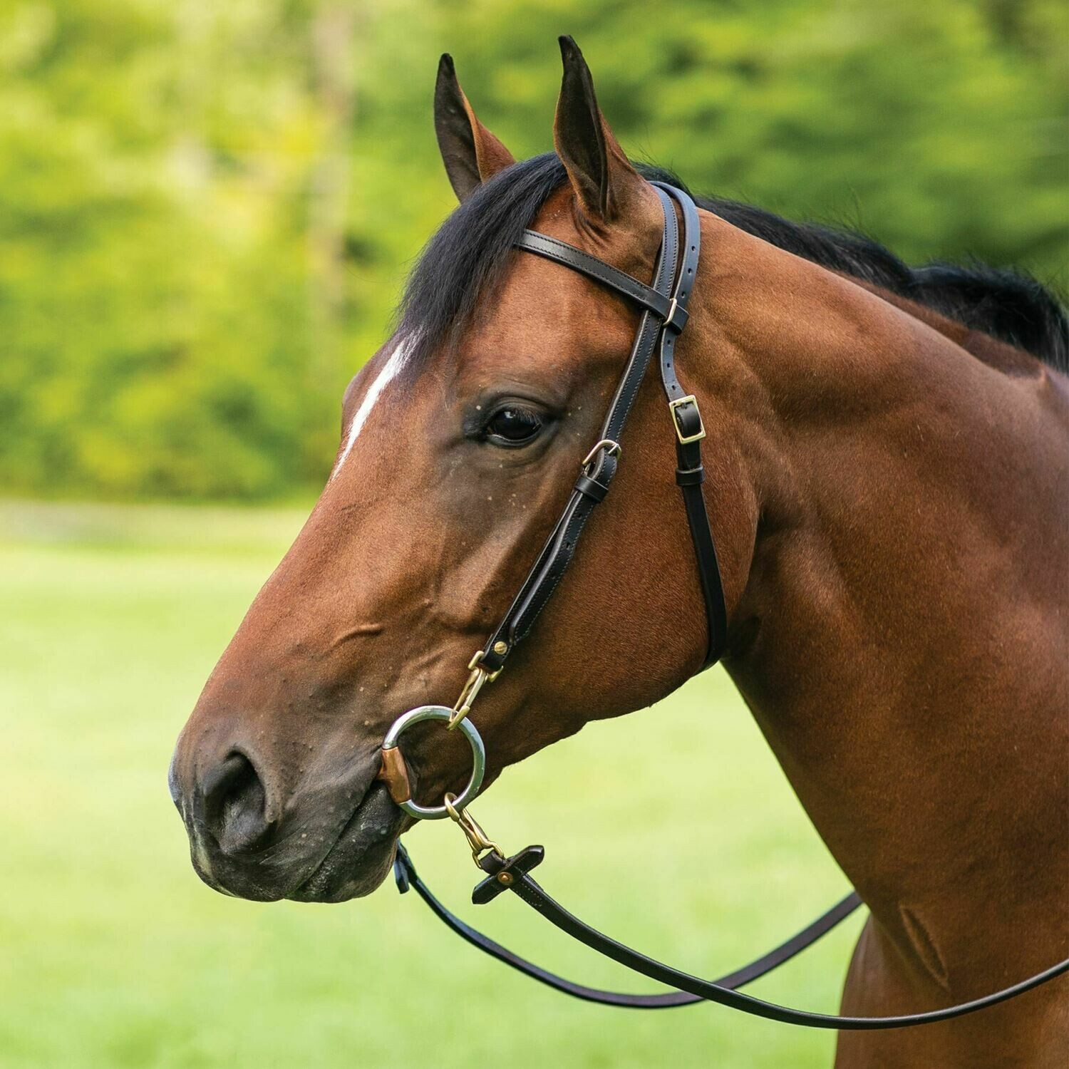 00219 Billy Royal® Work Bridle Headstall