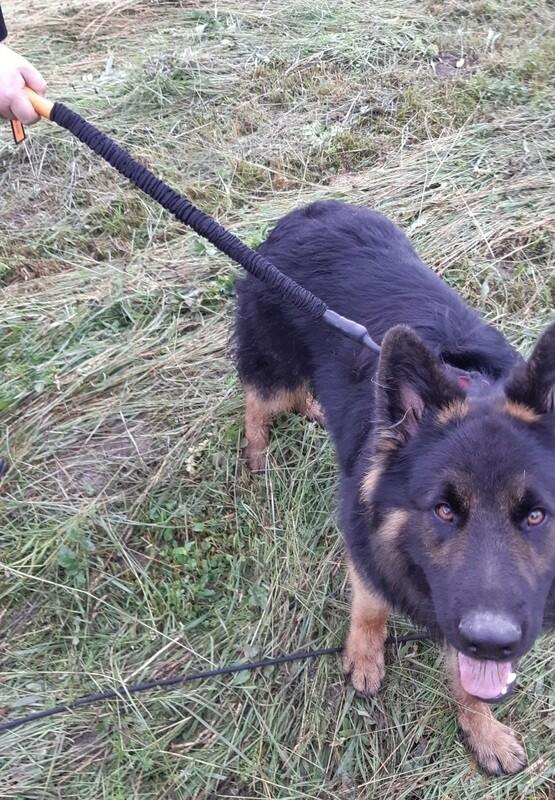 traindee 4-fach dehnbare Hundeleine 0.5m gegen Ziehen