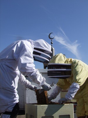 Beekeeping Course - 6 Weekday Evenings - 5.30pm - 7.00pm