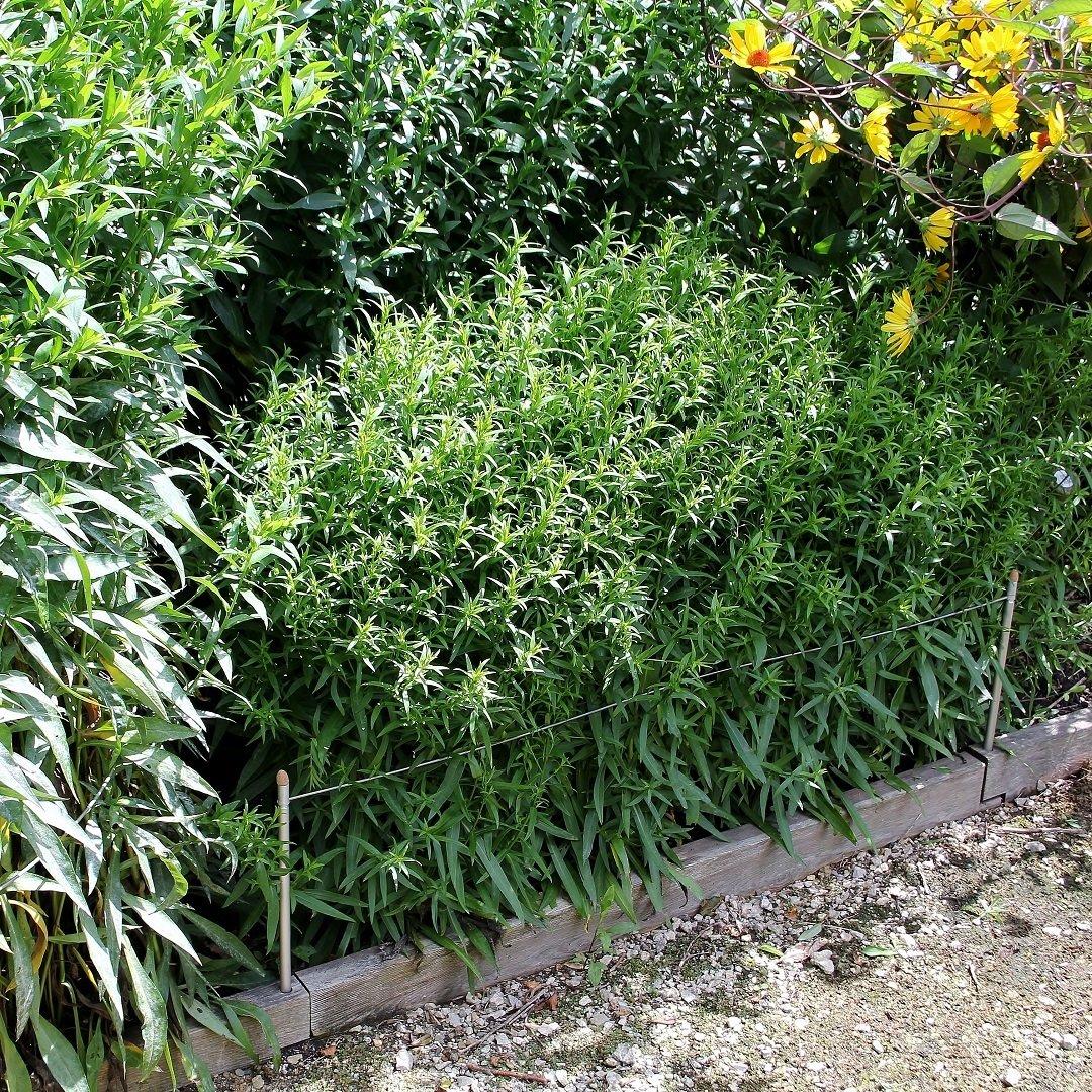 2 veelzijdige plantensteunen Smart 3-in-1   L 100 cm