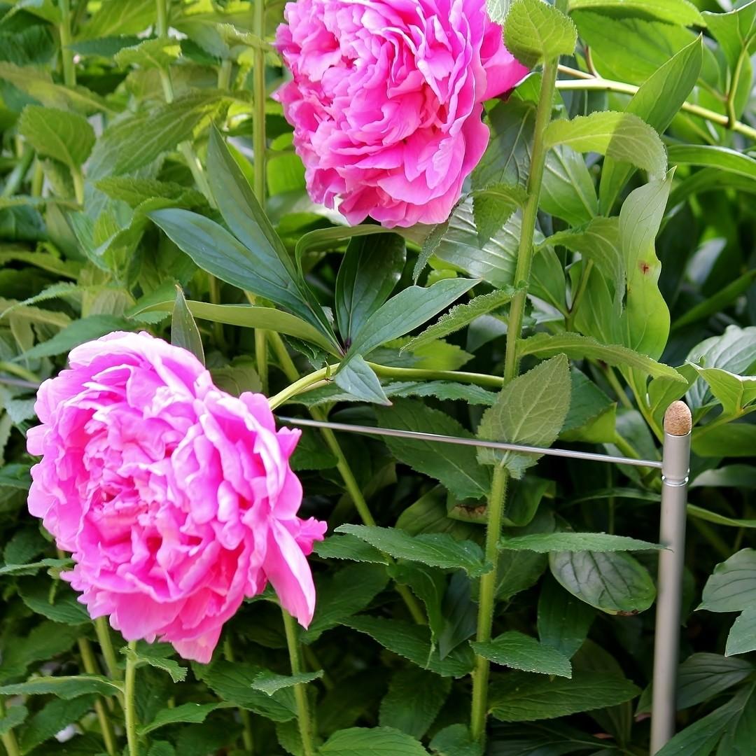 2 veelzijdige plantensteunen Smart 3-in-1 | L 125 cm