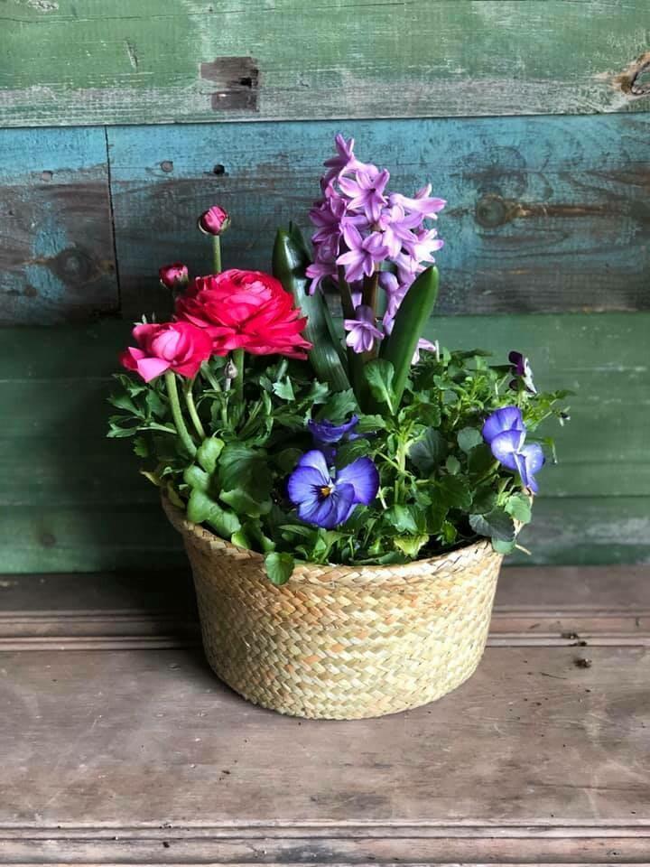 Seasonal Flower Planter - 8 inch