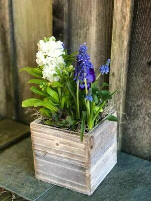 5-4 Community Helper Gift of the Week: Whitewashed Box Spring Planter
