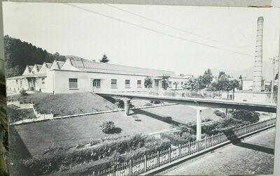 Vintage Stehli Silk Company Tropical Factory Photograph Print 38