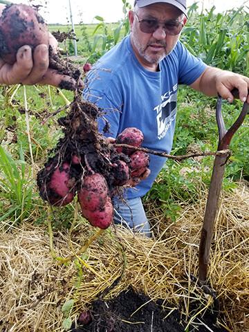 Seed Potato 4-H Kit