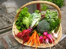 CSA- Community Supported Agriculture