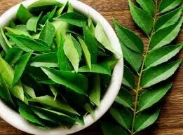 CURRY LEAF PK