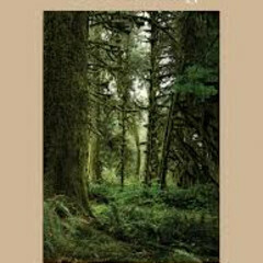 Healing Magic Forest Bathing