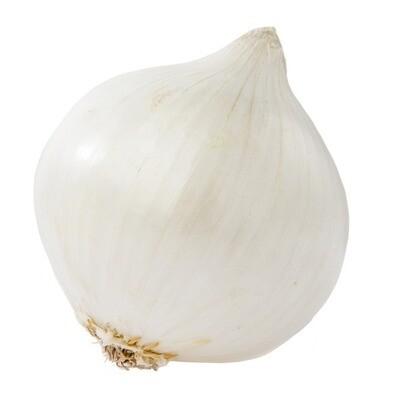 Onion - White