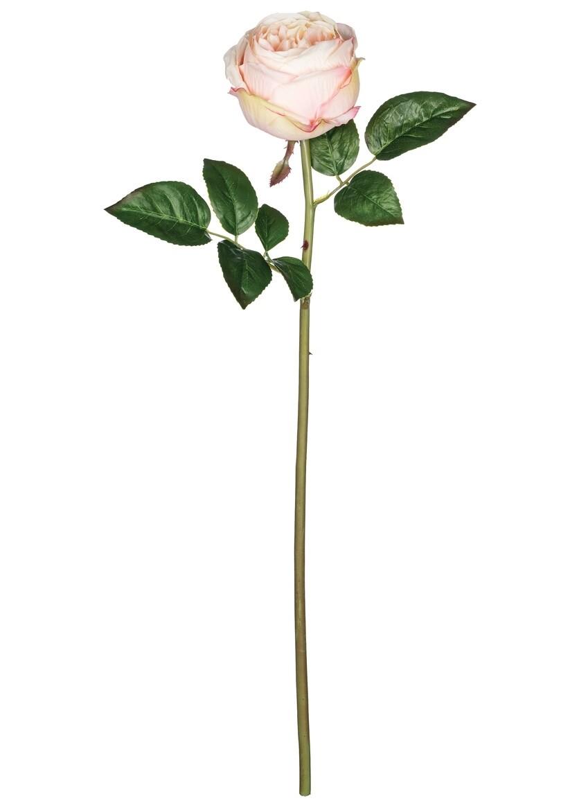 Cabbage Rose Stem