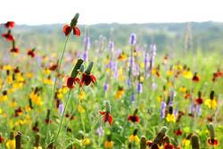 Nebraska Flower Field