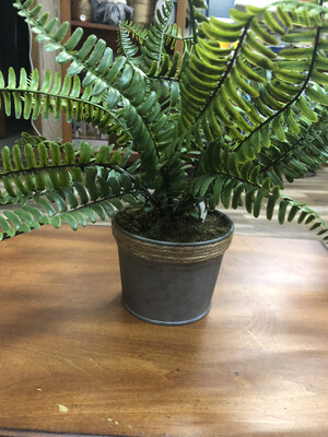 Potted Fern 14.5