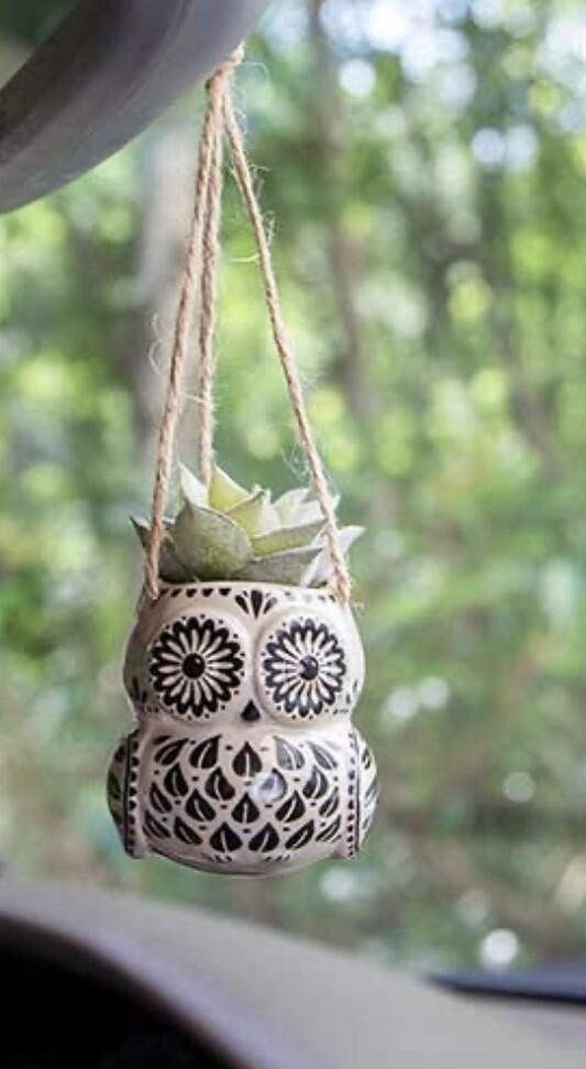 Owl Succulent