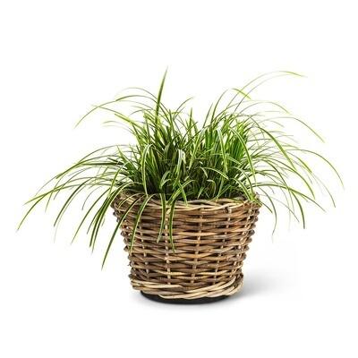 Woven Wicker Planter