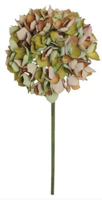 Rust Dried Hydrangea Blooms