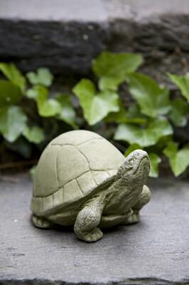 Box turtle br