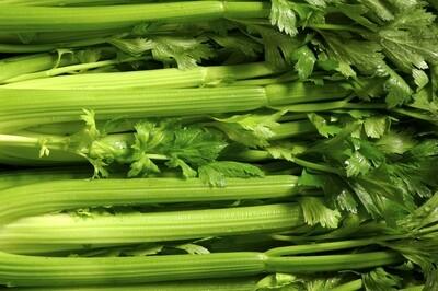 Organic Celery Tall Utah Seed