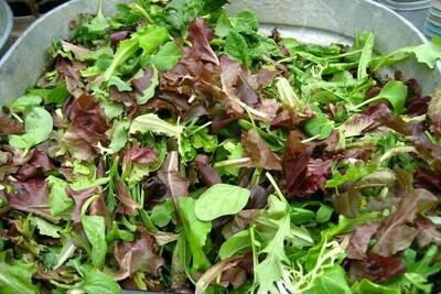 Organic Mesclun Province Style Seed