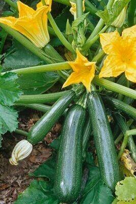 Organic Squash Fordhook Zucchini Seed