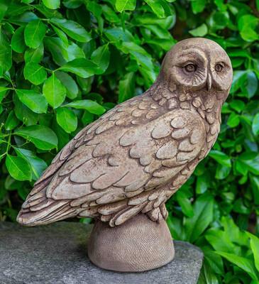 Snowy Owl - AS