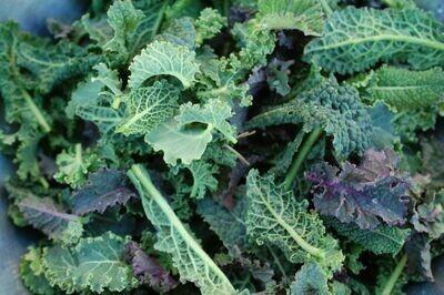 Organic Kale Nancy's Baby Leaf Blend Seed