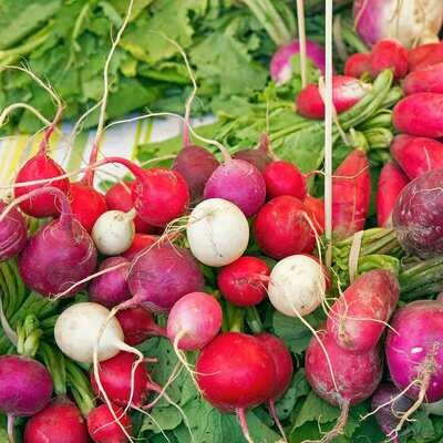 Organic Radish Kaleidescope Mix Seed