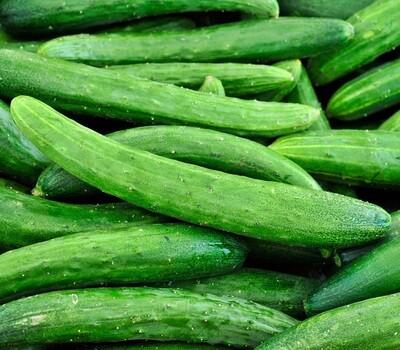 Organic Cucumber Early Spring Burpless Seed