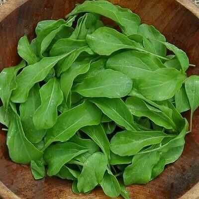 Organic Arugula Astro Seed