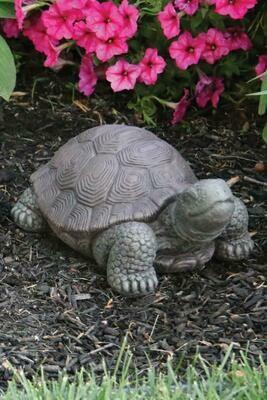 "Tortoise -Small - 8"""