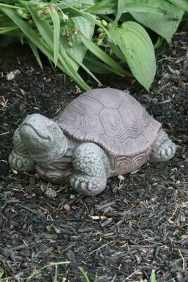Tortoise -Small - 7