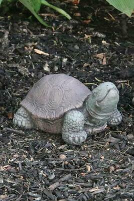 Tortoise- Extra Small - 5