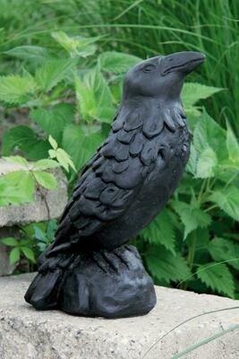 Crow - Medium - (BLK)