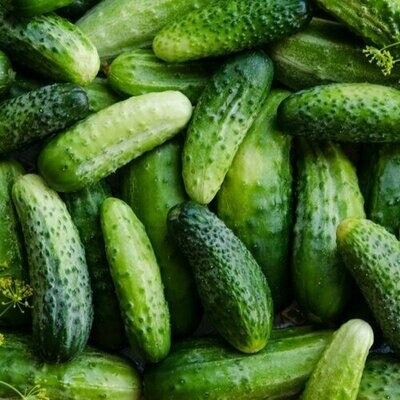 Cucumber Boston Pickling Heritage Seed