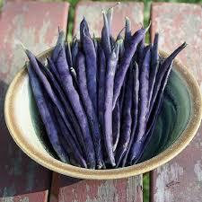 Beans Royal Burgundy Bush