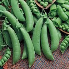 Organic Pea Sugar Snap Cascadia Seed