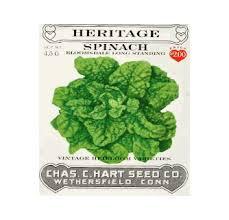 Spinach Savoyed Leaf Bloomsdale Heritage Seed