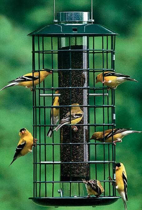 Green Wire Bird Feeder