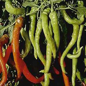 Pepper - Peperoncin Italian Hot 4.5