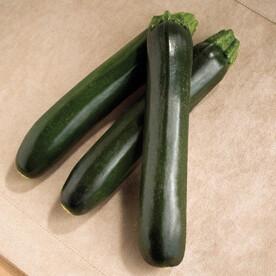"Zucchini - Smooth Picking 4.5"""