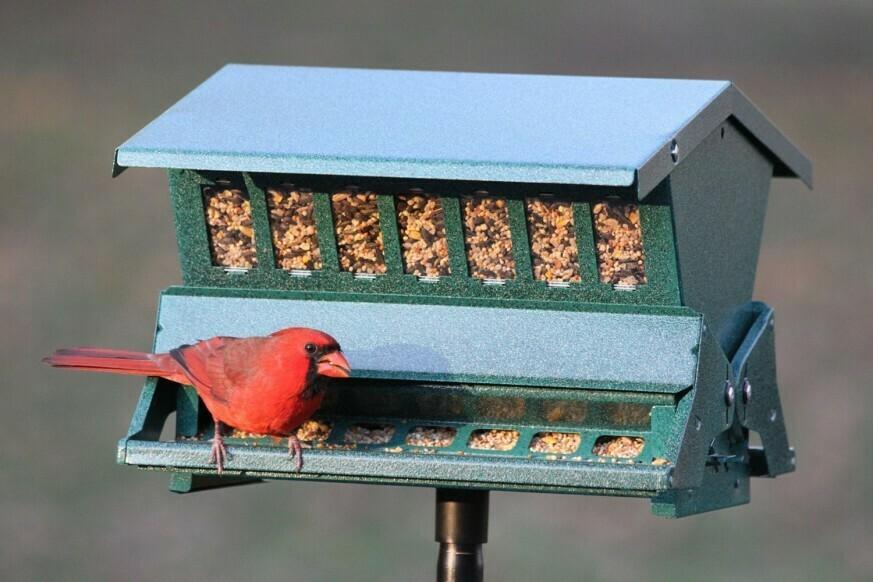Absolute Squirrel-Resistant Bird Feeder