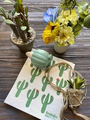 Cactus & Bloom Surprise Box