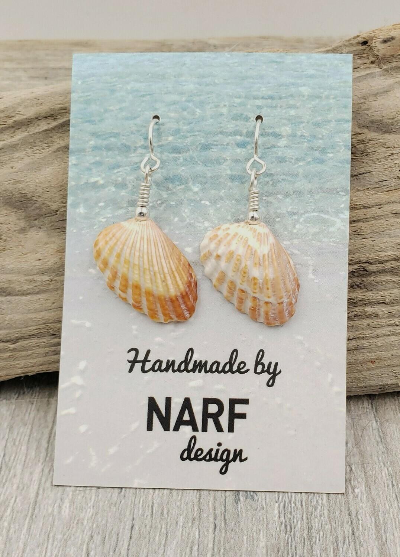 Broad Ribbed Cardita Shell Earrings