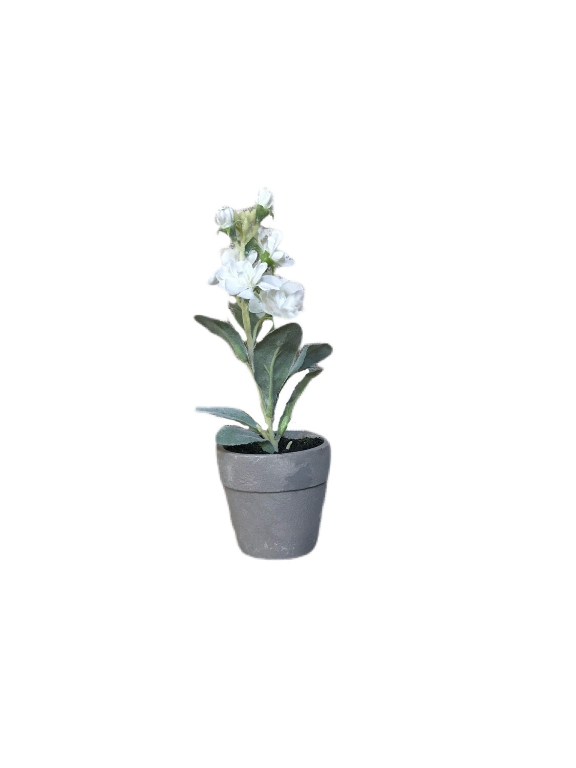 6 inch potted stock flowers