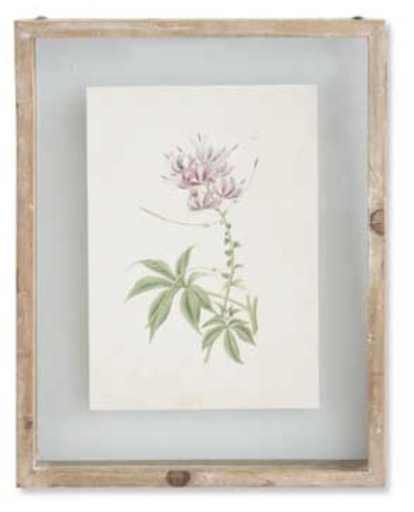 10 inch botanical print in shadow box A