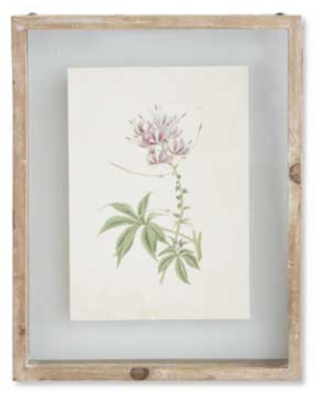 10 inch botanical print in shadow box A