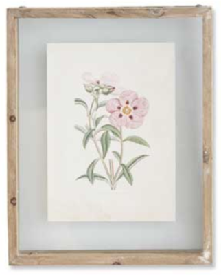 10 inch botanical print in shadow box B