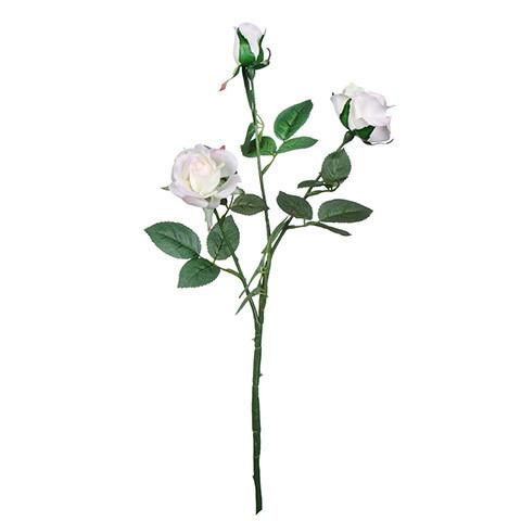 Sweetheart rose white