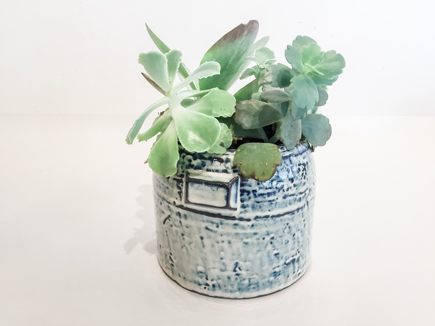 """AR053A PLANTED  Pier Collection - Pot 5"""" x 4"""" - Planted"""