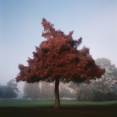 The Autumn Tree