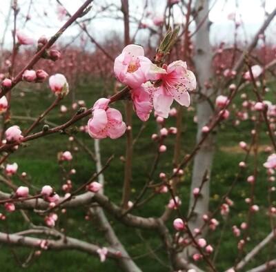 Blossom Bakery Gift Card